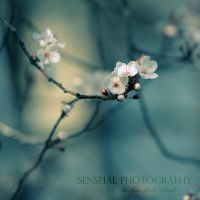 Spring in dreamland by Inside-my-ART