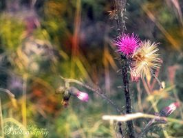 Color Field by TaliNatPhotography