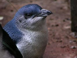 Blue penguin by Henrieke