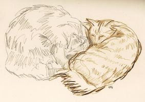 My cats, sleeping by lienertje
