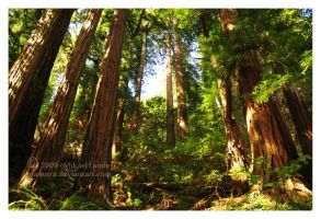 Redwood by Manveru