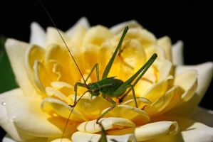 KATYDID RESCUE, PART ONE by Sandy33311