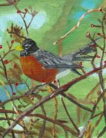 American Robin by PlayerBill