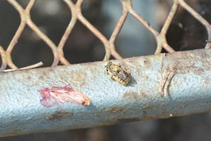Bee Bug Resting On Metal and Cleaning by Miss-Tbones