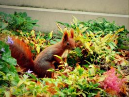 Squirrel by philia-n