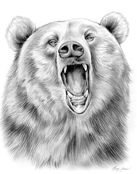 Grizzly Bear in Graphite Pencil by gregchapin