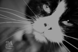 My Cat, Baby in B-W by Pi-ray