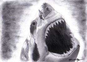 sharkie by thechikwiththepencil