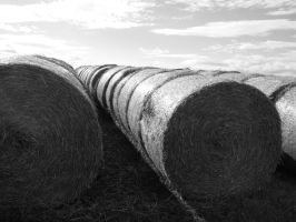 Hay Bales and Sunshine by alanhay