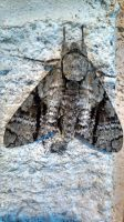 Moth no. 2 by milstead1988