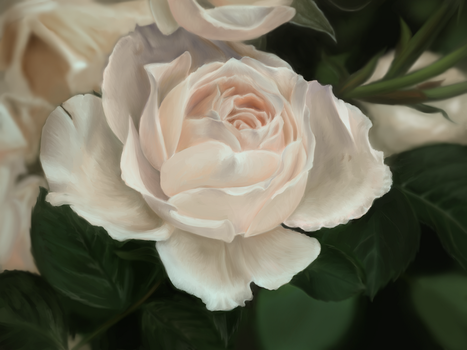 Princess of Wales Rose (Photo Study) by AmyAnnie14