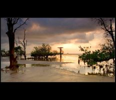 Mangrove Beach by hilmanfajar