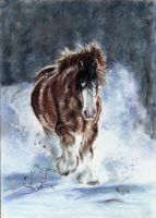 33. Equine winter 2 by Mrfour1