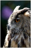 Eagle Owl Portrait by W0LLE