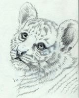 Tiger cub by IlseVerbeek