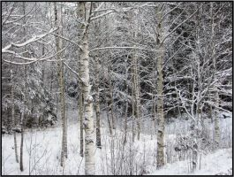 Forest in the snow by batjenka
