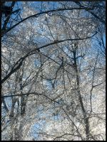 Iced Trees by DevilsSnare