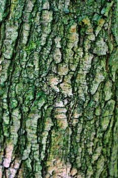 Bark Texture 2 by 0-Symmetry-0
