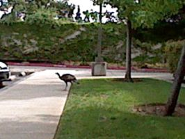 gobble gobble by RUinc