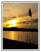 Late Fall Sunset Behind Reeds by lehPhotography
