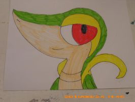 Snivy drawing by Zoruaofepic