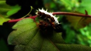 Comma Caterpillar by graphic-rusty