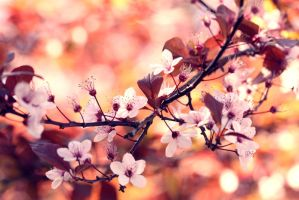 Colours of Springtime. by incredi