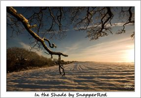 In the Shade by SnapperRod
