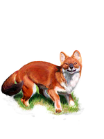 TE Dhole 2 by Joava