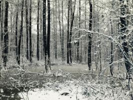 Trees in frozen water by Caillean-Photography
