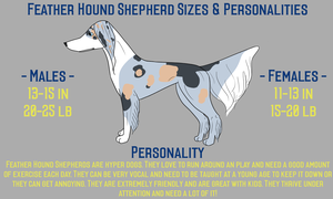 Feather Hound Shepherd Sizes and Personalities by Sommer-Studios