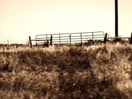 Field by DrowningSignificance