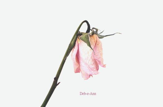 A pale antique rose by Deb-e-ann