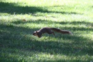 Squirrel Action Shot by AndehDulac