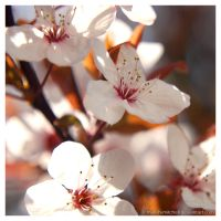 A Sign of Spring - 4 of 6 by matt-h-mitchell
