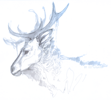 Deer by LiLaiRa