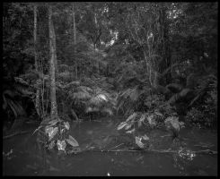 Jungle in Black and White #1 by Roger-Wilco-66