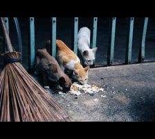 Street cats by laminimouse