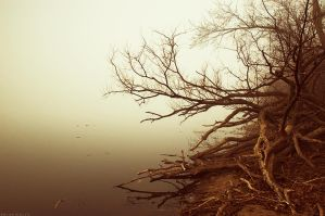 Shrouded in Fog I by BrianWolfe
