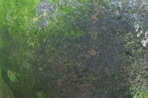 Mossy moldy pottery surface by paintresseye