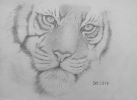 tiger closeup by acrylicwildlife