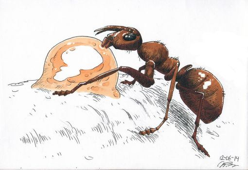Ant eating sap by paranoidanders