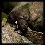 Otters: Hug Time by TVD-Photography