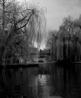 The River Cam, Cambridge by MissPennyFarthing