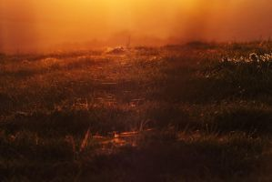 Fields of Golden Webbs by FaerieElle