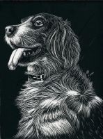Dog Scratchboard by wyrmaster