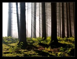 In the Forest - Part II by Hartmut-Lerch
