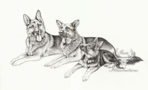 3 German Shepherds commission by Gaia-Illustrations