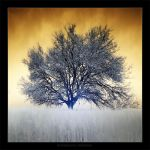 The Flaming Tree by gilad