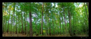 Woods Pano HDR by joelht74